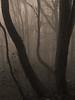 Vercors, 2017 (Olivier BERTRAND) Tags: vercors blackandwhite blackandwhitephotography digitalphotography neige forest forêt hiver isère landscape lumix25mm lumix monochrome micro43 noiretblanc nature naturallight olivierbertrand olympusem5markii olympus paysage panasoniclumix25mm winter woods snow 25mm primelens photography landscapephotography