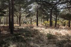 untitled-35.jpg (brittunculi) Tags: dorset arne