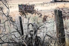 Golden grasses (Jessie T*) Tags: grass fence weatheredwood sagebrush grasses wagon fencewire fencefriday