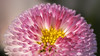 Flower (Friedhelm Hofstetter) Tags: deu deutschland franken schonungen makro blume