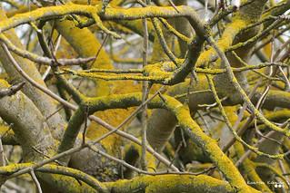 Branches complex...