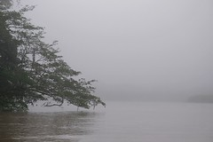 Misty morning on the jungle river (Wanda Amos@Old Bar) Tags: forest atmosphere wandaamos water tree river morning mist fog kinabatanganriver