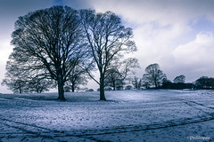 A Surprise Gift (Peeblespair) Tags: peeblespairphotography skirwith penrith cumbria winterscene blue icy snow snowy england