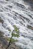 Bow Valley Falls, Banff (aud.watson) Tags: canada alberta canadianrockies albertasrockies banffnationalpark banff bowrivervally bowriver bowriverfalls rivervalley river waterfall rapids rocks rock stones stone pebble