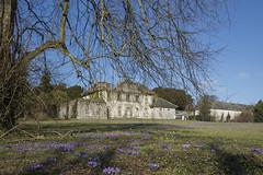 Kilmacurragh spring 2018 ~ Explored (Wendy:) Tags: explored kilmacurragh arboretum crocus purple queenanne house dilapidated spring opw