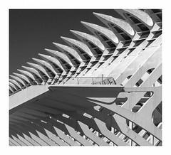 Museo de las Ciencias Príncipe Felipe (AurelioZen) Tags: europe spain valencia ciudaddelasartesylasciencias museodelascienciaspríncipefelipe santiagocalatrava buttresses flyingbuttresses lumixgvario1445mmf3556