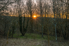 Where is spring? (Dax Borghi) Tags: 750d eos canon calm nature sunset forest tree foresta albero erba sole sun tramonto sigma 1770mm grass tuscany toscana pace natura