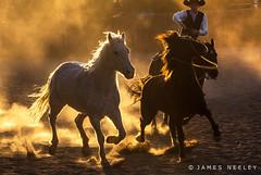 Color of Light (James Neeley) Tags: coloroflight newmexico santafe horses ranch light color jamesneeley