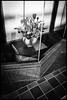 Ōdōri, Morioka-shi, Iwate-ken (GioMagPhotographer) Tags: iwateken moriokashi japonica leicamonochrom tohoku plants ōdōri empty storefront japanproject japan detail dri