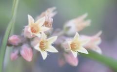 Spring in the meadows (pasquale di marzo) Tags: flowers fiori primavera prati colori tenui macro aprile 2018