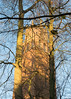 Berners Folly (Spannarama) Tags: trees sunlight sunshine lowsun goldenhour shadows afternoonlight faringdonfolly bernersfolly woodland woods faringdon oxfordshire uk