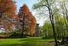 Aremberg (clemensgilles) Tags: wälder bäume trees burg spring germany beautiful eifel