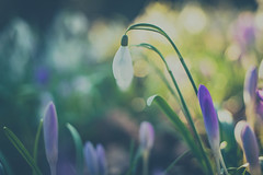 Dreamy (michel1276) Tags: pentacon pentaconauto5018 pentaconauto1850 manualfocus vintagelens bokeh bokehlicious bokehful bokehlove flower flowers flora flowerwatcher flowerscolors m42