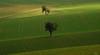 the Nothingness (Lutz Koch) Tags: idsteinerland idstein taunus elkaypics lutzkoch field acker baum tree spring märz march dogwalk feld linien lines sunlight shadow sunnenlicht schatten nassau rüd rheingautaunuskreis