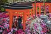 Sakura Matsuri Floral Display @ Gardens by the Bay (gintks) Tags: gintaygintks gintks singapore singaporetourismboard gbtb gardensbythebay sakura sakuramatsuri japanesedolls flowerdome floraldisplay sakuraseason canonef100mmf28lisusmmacro singaporetourism singaporetoday travelsingapore sgig landscape exploresingapore yoursingapore visitsingapore thisissingapore instag singaporeinsiders canon6d canon5dmarkiv canonsg showthefullpicture teamcanonsg