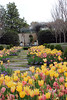 dallas blooms 2018 13 (reluctant_paladin) Tags: dallas texas arboretum blooms flowers garden spring 2018 tulips
