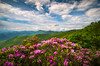 North Carolina Spring Flowers Mountain Landscape Blue Ridge Parkway Asheville NC (Dave Allen Photography) Tags: asheville northcarolina nc spring flowers landscape mountains blueridgeparkway scenic nature springflowers outdoors appalachian summer june rhododendron blooms blooming explore southernappalachians sky