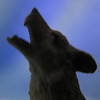 Who's afraid of the Big Bad Wolf... (Coyoty) Tags: macromondays onceuponatime fairytale wolf bigbadwolf shadow silhouette macro bokeh gray blue grey square squareformat howl howling lighting figurine figural winestopper dark fantasy