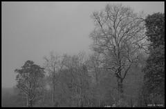 20180319_Sous la Neige (Clapiotte_Astro) Tags: hiver tamron1750mm canon700d tree arbres neige snow vendée treizevents