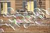 sospese nell'aria (imma.brunetti) Tags: bolle roma piazzadelpopolo riflessi giochi finestre pincio lampioni artisti sfinge statua sculture villaborghese centro lazio bugnato
