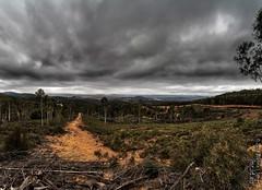 Blue Range Road (317818WLJ) Tags: canon5dmk2 canon1740f4l canberra bluerangeroad coree act stormy clouds black bush forest dirt dust abctv weather photo weatherpic weatherphoto 23march2018