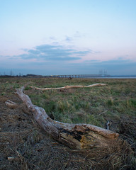 P2231024(2) (matt.rainsford) Tags: driftwood river riversevern severncrossing bluehour bridge