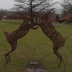 2018_03_0349 (petermit2) Tags: royalhorticulturalsociety rhs harlowcarr garden gardens harrogate northyorkshire yorkshire hare
