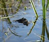 frogs (nerys hamutal) Tags: neryshamutal frog oxford spiegelungen reflections