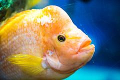 Fishy (Thomas Hawk) Tags: america citymuseum citymuseumstlouis missouri stlouis usa unitedstates unitedstatesofamerica fish us fav10