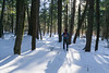 Dukes Research Natural Area, February 2018-13 (Nathan Invincible) Tags: dukes research naturalarea dukesresearchnaturalarea upperpeninsula up michigan michigansupperpeninsula mi marquette marquettecounty winter ski backcountry backcountryski snow oldgrowth forest usforestservice woods hemlock hemlocks