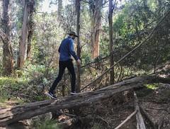 Fryman Canyon Park (p.bjork) Tags: hiking log laurelcanyon frymancanyon losangeles california