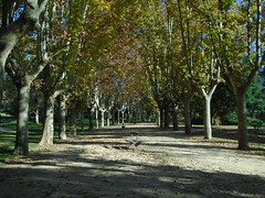 (sftrajan) Tags: españa parquedeloeste madrid spain otoño autumn park parque espanha walking november trees outono herbst मैड्रिड испания осень мадрид espanya espagne