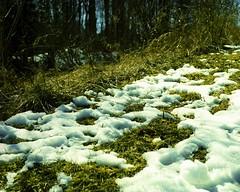 Melting Snow 2 (pmvarsa) Tags: spring 2018 analog transparency slide film 120 mf mediumformat fuji fujiprovia100f provia 100iso colour nikonsupercoolscan9000ed nikon coolscan cans2s rebirth mood texture mamiya rb67 mamiyarb67pros classic camera snow melt ice dry grasses art waterloo ontario canada