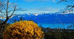 SWITZERLAND - Leman Lake (Jacques Rollet (19 000 000 + views)) Tags: nuage cloud ciel sky