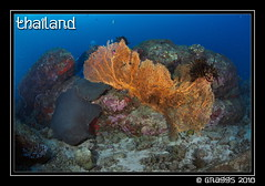 _MG_2042 (Graggs) Tags: blue canon5dmkii diving scuba similanislands thailand uwp underwater underwaterphotography gorgorianfan