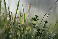 Le nez dans l'herbe (Excalibur67) Tags: nikon d750 sigma contemporary 100400f563dgoshsmc paysage landscape nature gouttedeau