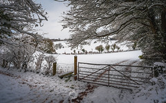 Winter Gate (RTA Photography) Tags: snow gate country trees nikon d750 nature outdoors spring winter white rtaphotography light nikkor1835 tracks field weather fence rural