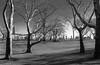 Meeting of Trees (Eric Gross) Tags: trees newyork manhattan centralpark radiance winter bw light monotone field