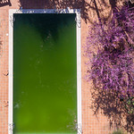 Aerial photo of an algae infested swimming pool thumbnail