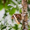 Burgers Zoo - Mangrove (Thea Teijgeler) Tags: dierentuin zoo burgerszoo butterfly vlinder mangrove