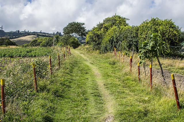 Caminos del Nodo Agrobiodiversidad Usme