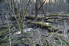 Naturschutzgebiet in Mecklenburg-Vorpommern (PhotobyTora) Tags: natur naturschutzgebiet bäume moos wasser moor sonnenschein sonne nachmittag mecklenburgvorpommern deutschland wald wälder