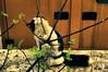 Tosun paşa (Hüseyin Başaoğlu) Tags: nikond300s nikon100mmf28seriese hüseyinbaşaoğlu huseyinbasaoglu biga pegai çanakkale dardanel turkei turquie türkiye