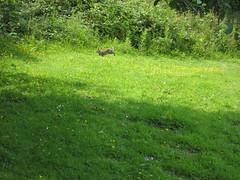 Rabbit (MonkeysBirthday) Tags: rabbit bunny animal cute wildlife