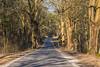 Early spring (jaceek81) Tags: spring wiosna lubuskie polska natura nature forest las fujifilm xt10