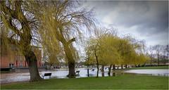 Take a seat, --- or two --- or three (brianac37) Tags: river flood riveravon stratforduponavon warwickshire willowtrees