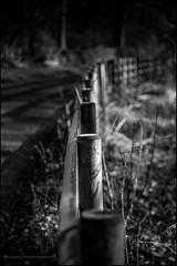 Radbourne fence (G. Postlethwaite esq.) Tags: bw dof derbyshire fencefriday hff radbournelane bend beyondbokeh blackandwhite bokeh depthoffield fence lane monochrome photoborder road selectivefocus winter