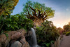 Circadian Rhythms of the Tree of Life (TheTimeTheSpace) Tags: waltdisneyworld disneyworld disney animalkingdom treeoflife sunset waterfall nikond810 rokinon12mm28 fisheye