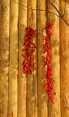 Hanging red chilli on wooden wall (phuong.sg@gmail.com) Tags: background board burning cayenne chile chili chilli closeup cook cooking cuisine detail dried dries drying eating fiery flavoring food fresh freshness hanging healthy heat hot ingredient kitchen nature old organic paprika pepper pile red ripe seasoning spice spicy taste texture vitamin wooden
