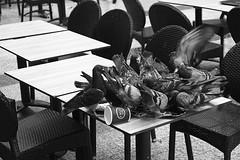 Enjoy your meal (Alexander Pellegrin) Tags: pigeon pigeons blackwhite blackwhitephotography blackandwhitephotography biancoenero monocrome monocromo bianconero paris parigi canon streetphotography street alexanderpellegrin photo photography photographeronflickr photographer canoneos30d